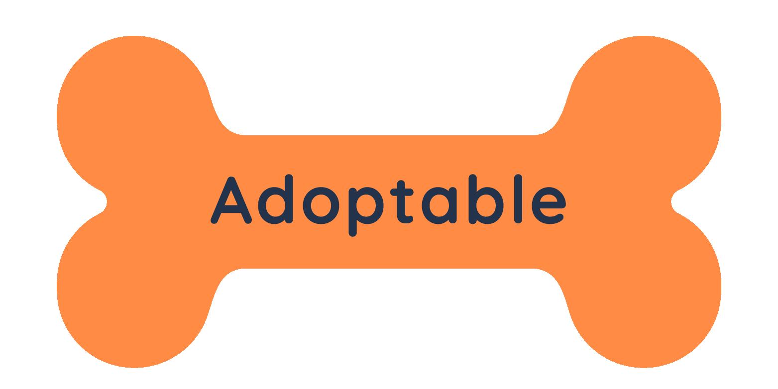 Dog Status - Adoptable
