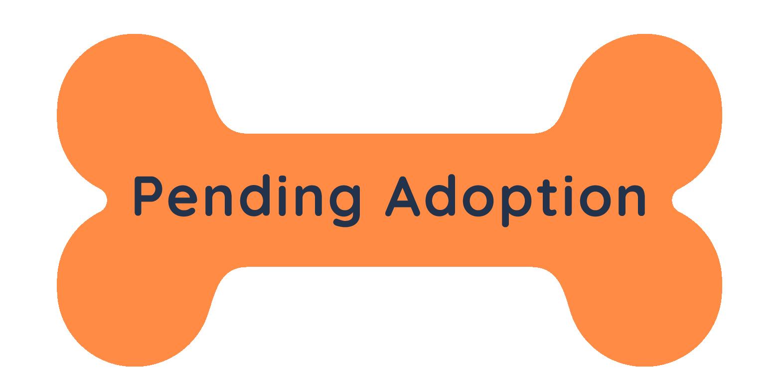 Dog Status - Pending Adoption