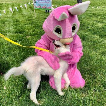 Easter bunny hugging dog