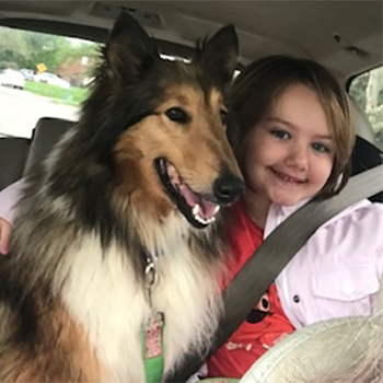 Collie dog sitting next to young girl in car